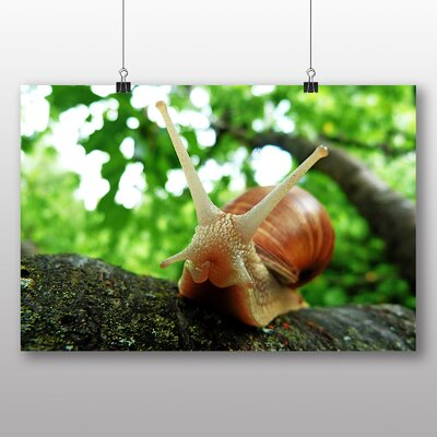 Big Box Art Snail Photographic Print