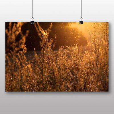 Big Box Art 'Summer Sun Through the Shrubs' Photographic Print