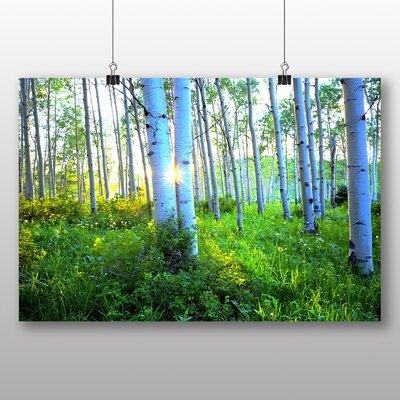 Big Box Art Sunrise Forest Wood Aspen Colorado USA Photographic Print Wrapped on Canvas