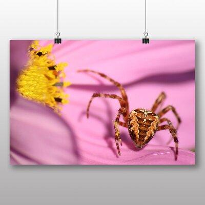Big Box Art Spider on Flower Photographic Print