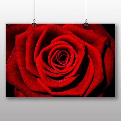 Big Box Art Rose Flower No.10 Photographic Print