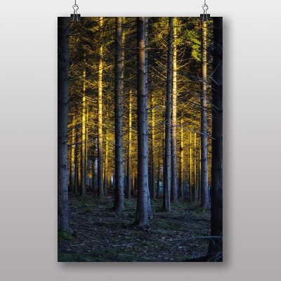 Big Box Art Sunlight Forest Wood No.12 Photographic Print on Canvas