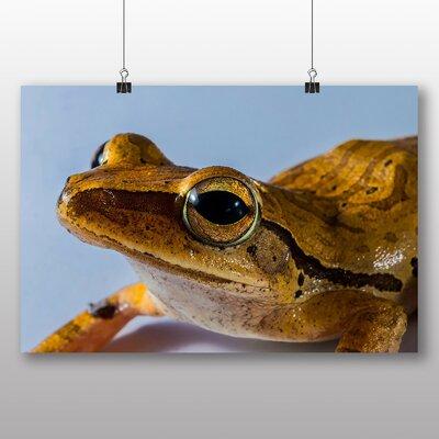 Big Box Art Tree Frog No.4 Photographic Print