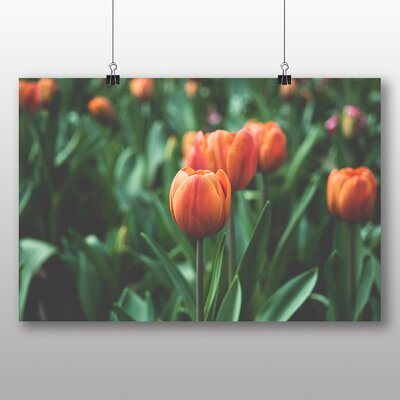 Big Box Art Tulip Photographic Print Wrapped on Canvas