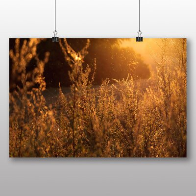 Big Box Art Sunlight over Meadow Photographic Print