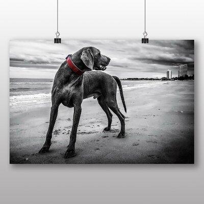 Big Box Art Weimaraner Dog Photographic Print Wrapped on Canvas