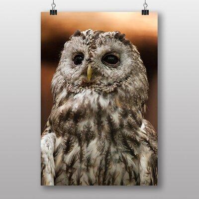 Big Box Art Tawny Owl Photographic Print Wrapped on Canvas