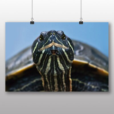 Big Box Art Turtle No.2 Photographic Print
