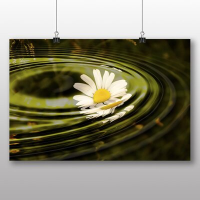 Big Box Art Daisy Flower No.4 Photographic Print