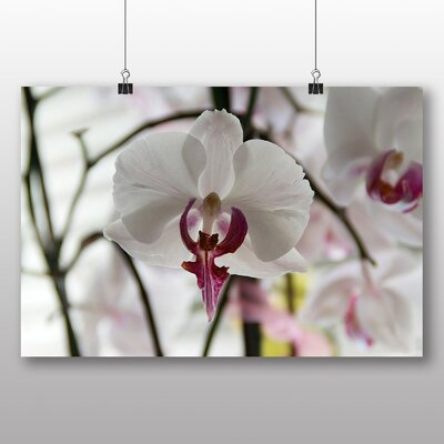 Big Box Art White Orchid Flower No.3 Photographic Print