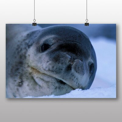 Big Box Art Seal No.2 Photographic Print