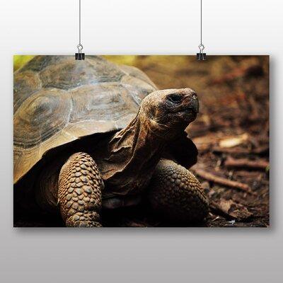 Big Box Art Tortoise Turtle Photographic Print Wrapped on Canvas