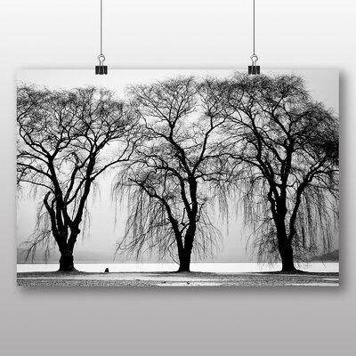Big Box Art 'Three Beautiful Trees' Photographic Print