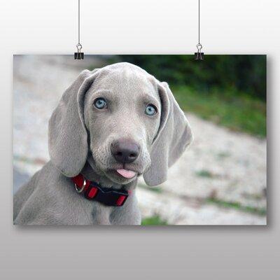 Big Box Art Weimaraner Puppy Dog Photographic Print Wrapped on Canvas