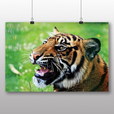 Big Box Art Tiger Snarling Graphic Art Wrapped on Canvas