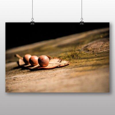 Big Box Art Tree Stump Photographic Print Wrapped on Canvas