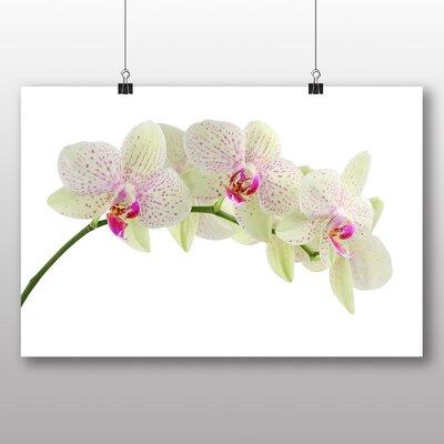Big Box Art White Orchid Flower No.2 Photographic Print