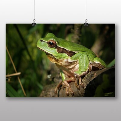 Big Box Art Tree Frog No.1 Photographic Print Wrapped on Canvas