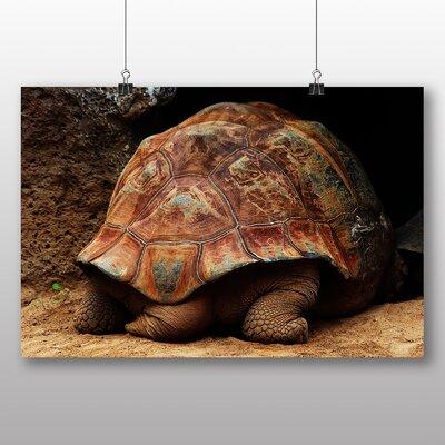 Big Box Art Turtle Tail Photographic Print