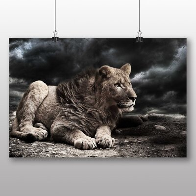 Big Box Art Young Lion Photographic Print Wrapped on Canvas