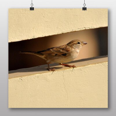 Big Box Art Sparrow No.2 Photographic Print Wrapped on Canvas