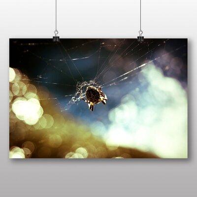 Big Box Art 'Spider and Cobweb No.3' Photographic Print
