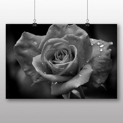Big Box Art White Rose Flower No.1 Photographic Print