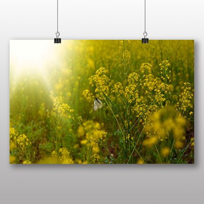 Big Box Art Sunlight over Meadow No.2 Photographic Print