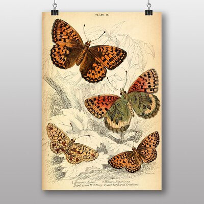Big Box Art Vintage Butterfly Graphic Art on Canvas