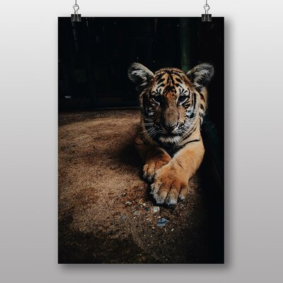 Big Box Art Young Tiger Photographic Print Wrapped on Canvas
