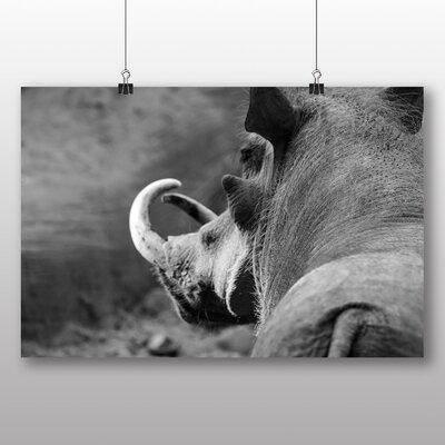 Big Box Art Warthog Photographic Print Wrapped on Canvas