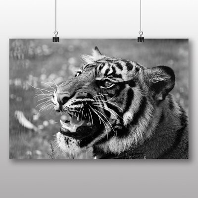 Big Box Art Tiger No.4 Photographic Print Wrapped on Canvas