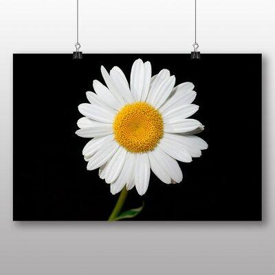 Big Box Art White Daisy Flower No.1 Photographic Print