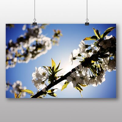 Big Box Art 'White Cherry Blossom' Photographic Print