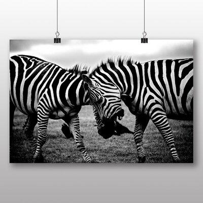 Big Box Art Zebras No.4 Photographic Print