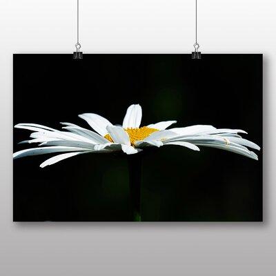 Big Box Art White Daisy Flower No.8 Photographic Print