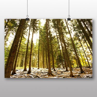 Big Box Art Winter Forest Photographic Print