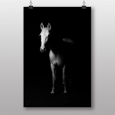 Big Box Art White Horse Photographic Print