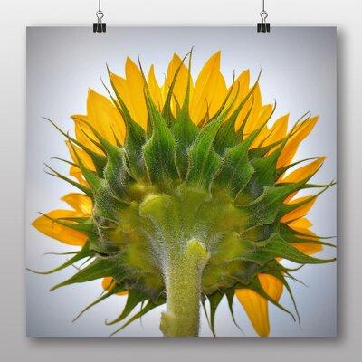 Big Box Art Yellow Sunflowers Flower No.9 Photographic Print