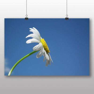 Big Box Art White Daisy Flower No.6 Photographic Print Wrapped on Canvas