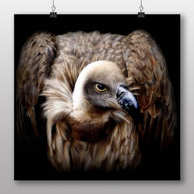 Big Box Art Vulture No.5 Photographic Print on Canvas