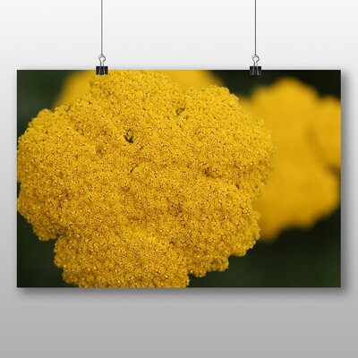 Big Box Art 'Yellow Flowers' Photographic Print