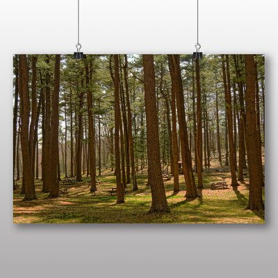 Big Box Art Woodland Park Photographic Print