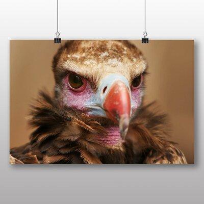 Big Box Art Vulture No.4 Photographic Print