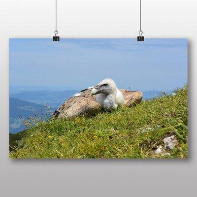 Big Box Art 'Resting Vulture' Photographic Print