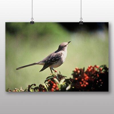 Big Box Art Mockingbird Photographic Print