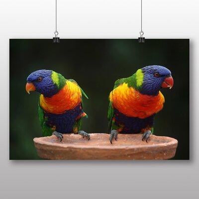 Big Box Art Rainbow Lorikeet Parrots Photographic Print