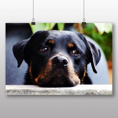 Big Box Art Rottweiler Dog Photographic Print