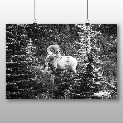 Big Box Art Ram Sheep Photographic Print