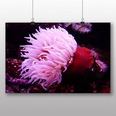 Big Box Art Sea Anemone No.2 Photographic Print